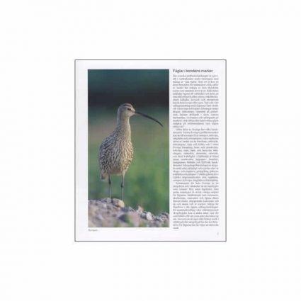 Fåglar i odlingslandskapet, sid 1