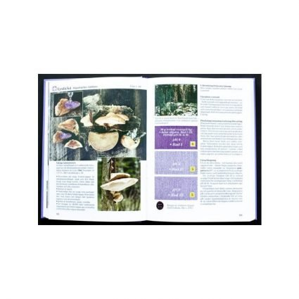 Färgsvampar & svampfärgning, uppslag 1