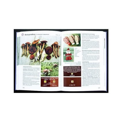 Färgsvampar & svampfärgning, uppslag 2