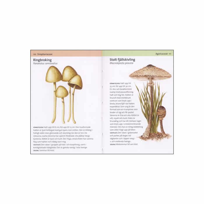 Svampar är en av titlarna som ingår i serien Lilla fälthandboken