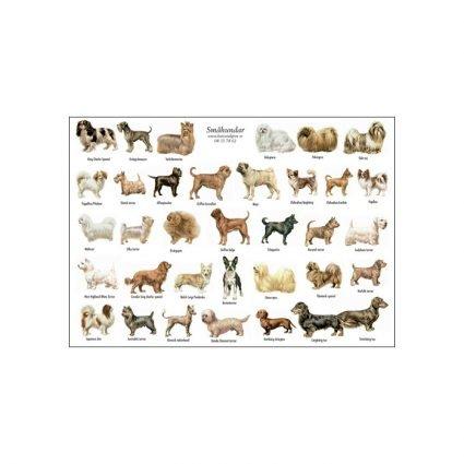 Småhundar