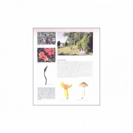 Svampar i odlingslandskapet, sid 8