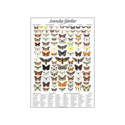 Svenska fjärilar