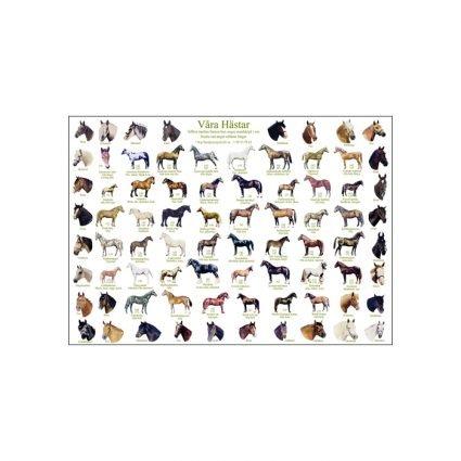 Våra hästar