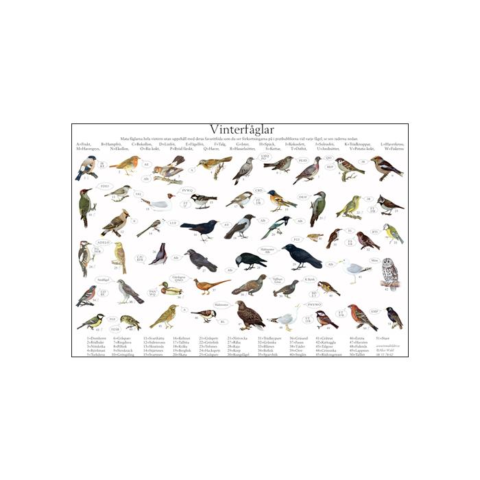 Vinterfåglar