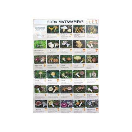 Affisch - Goda matsvampar (Holmberg/Krikorev)