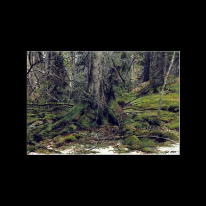 Skimraskogens hemlighet