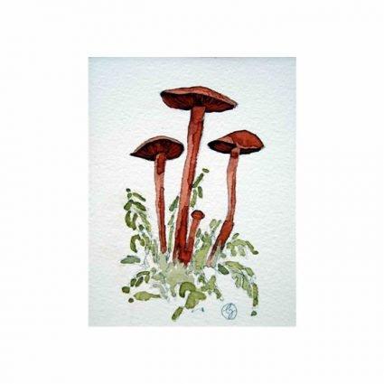 Blodspindling, Cortinarius sanguineus