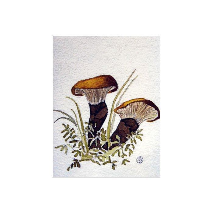 Sammetsfotad pluggskivling, Paxillus atromentosus