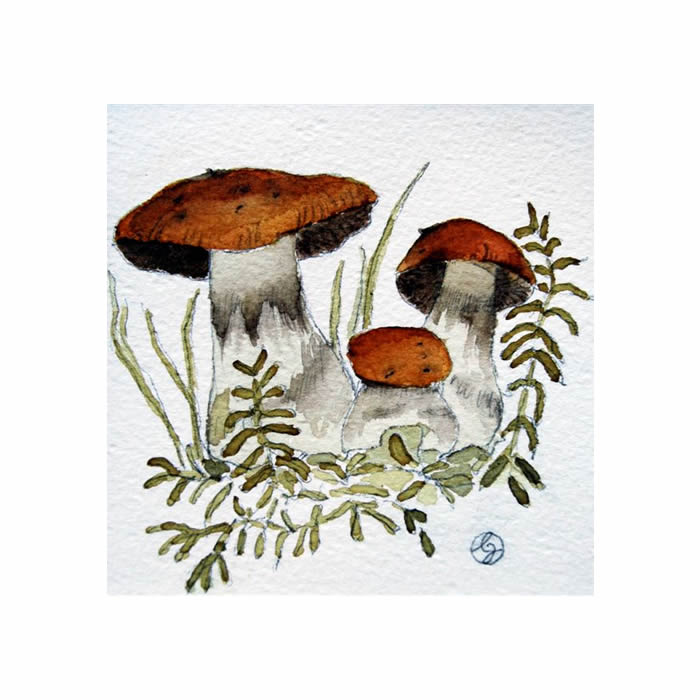 Spindelskivling, Cortinarius sp.