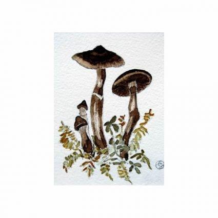 Umbrabrun spindling, Cortinarius brunneus