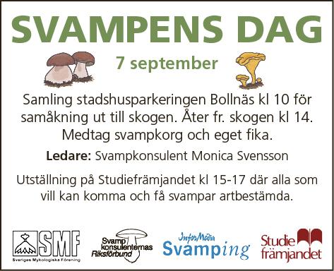 Svampens dag 2014, Bollnäs-Nytt