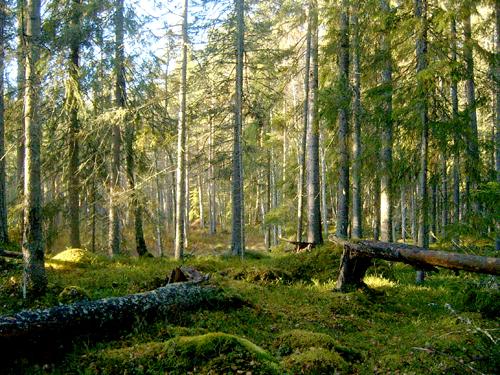 Järvsböleskogen