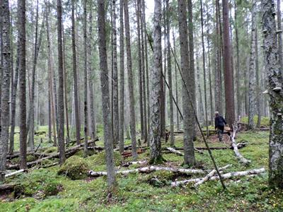 Tjuvbergets Naturreservat