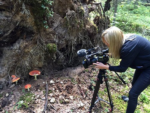 Flugsvampar, SVT i svampskogen