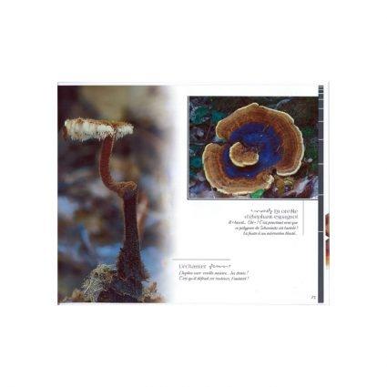 Mycolor, sid 73