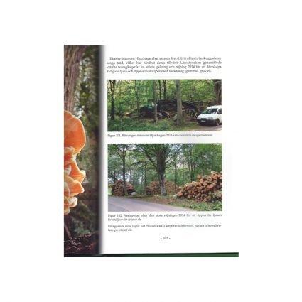 Svampar på Kullaberg, sid 105