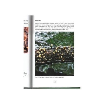 Svampar på Kullaberg, sid 115