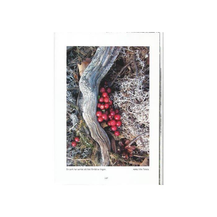 Skogslandskap farväl, sid 147