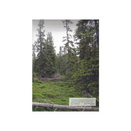 Skogslandskap farväl, sid 149