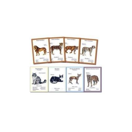 Kattspelet, exempel på spelkort