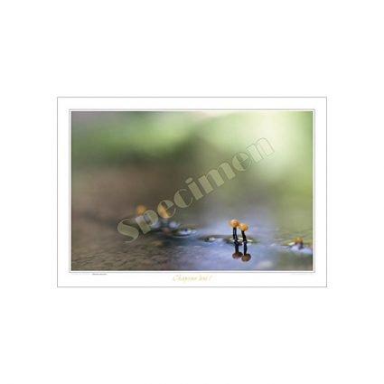 Bäckmurkling, Vibrissea truncorum