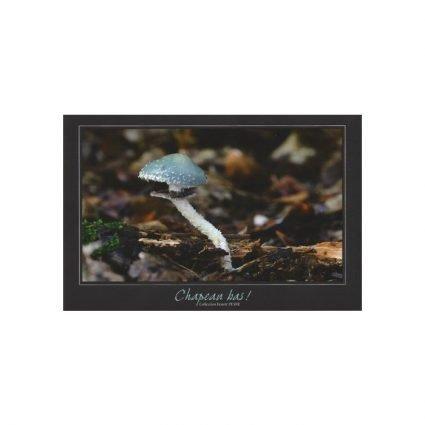 Ärggrön kragskivling, Stropharia aeruginosa, vykort