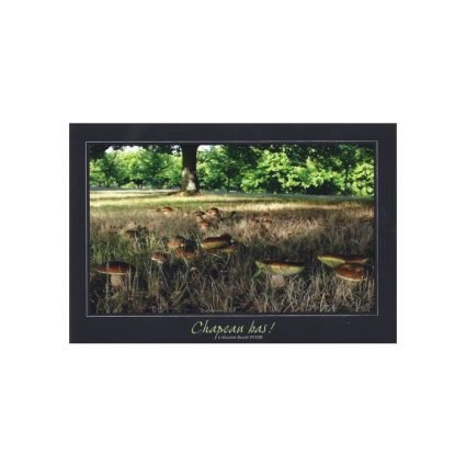 Finluden stensopp, Boletus aestivalis/Boletus reticulatus, vykort