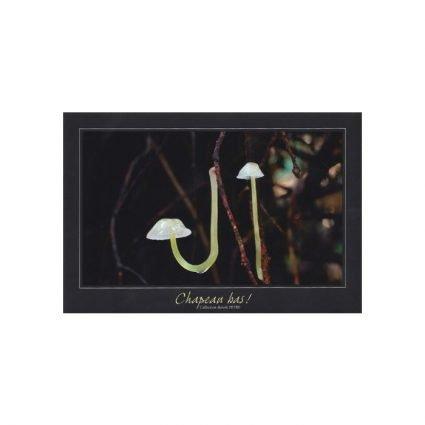 Flåhätta, Mycena epipterygia, vykort