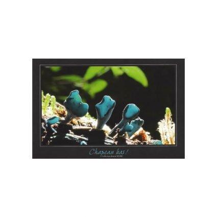 Grönskål, Chlorociboria aeruginascens, vykort