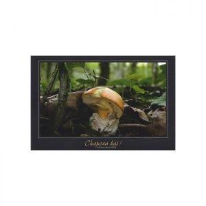 Kejsarflugsvamp, Amanita caesarea, vykort