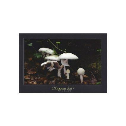 Knölchampinjon, Agaricus silvicola, vykort