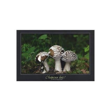 Panterflugsvamp, Amanita pantherina, vykort