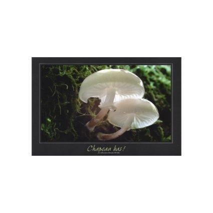 Porslinsskivling, Oudemansiella mucida, vykort