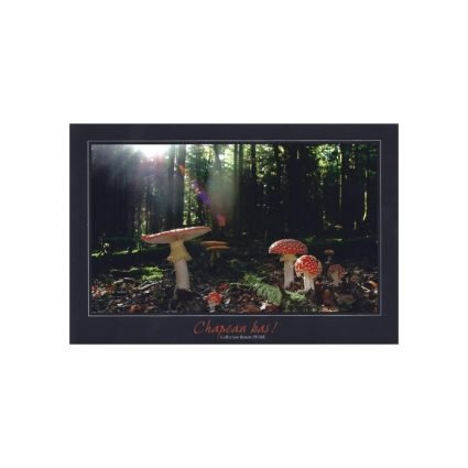 Röd flugsvamp, Amanita muscaria, vykort