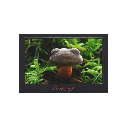 Rutsopp, Xerocomus chrysenteron/Xerocomellus chrysenteron, vykort