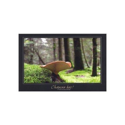 Sammetsfotad pluggskivling, Tapinella atrotomentosa, vykort