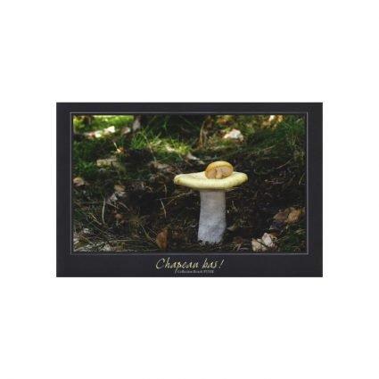 Senapskremla, Russula ochroleuca, vykort
