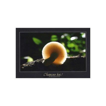 Stenticka, Polyporus lentus/Polyporus tuberaster, vykort