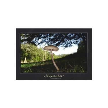 Stolt fjällskivling, Macrolepiota procera, vykort