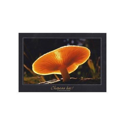 Stubbmusseron, Tricholomopsis decora, vykort