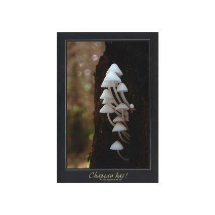 Vithättor, Hemimycena, vykort