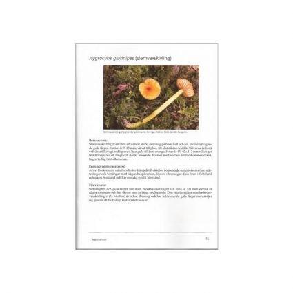 Ängssvampar, SMF, sid 51